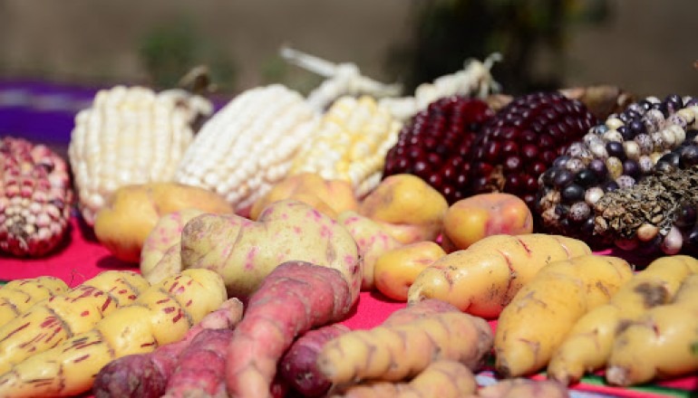 Peruvian corn and tubers, Peru